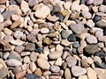 Background of beach pebbles Royalty Free Stock Images