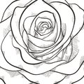 Background with beautiful black and white rose hand drawn contour lines strokes Stock Image