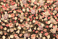 Background of Beautiful flower wedding decoration Royalty Free Stock Photo