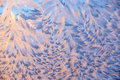 Background beautiful frosty pattern on glass in violet tones closeup Stock Photography