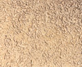 Background beige stone texture bark boring beetle Royalty Free Stock Photos