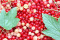 Background of berries of red and white currants the with leaves Royalty Free Stock Photography