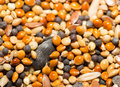 Background of birdseed. close Royalty Free Stock Photo