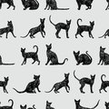 Background with black cats Royalty Free Stock Images