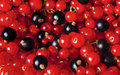 Background from blackberries and currants close up Royalty Free Stock Image