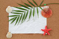 Background with blank crumpled paper, seashells, palm leave and seashell Stock Images