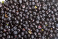 Background of blueberries ripe black blueberry Royalty Free Stock Image