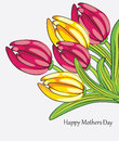 Background with bouquet of tulips vector holiday Royalty Free Stock Photo