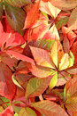 Background from bright autumn leaves multi colored Stock Photography