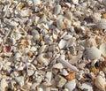 Background of broken shells beach theme