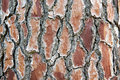 Background brown tree bark Royalty Free Stock Photo