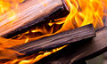Background burning logs bright flames and Royalty Free Stock Image