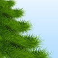 Background christmas tree spruce green with space for text new year vector illustration editable and isolated Royalty Free Stock Photography
