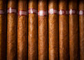 Background cigars in humidor Stock Images