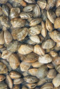 The background of clams with striations Stock Image