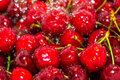 Background with close up of ripe cherries and freezed water drops rinsed over it Royalty Free Stock Photos