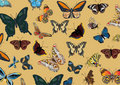 Background with color butterflies Stock Image