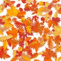 Background of colored wet autumnal maple leaves. EPS 10