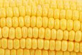 Background of corn grains close up whole Royalty Free Stock Image