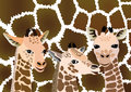 Background with cubs giraffe three on skin adult Stock Images