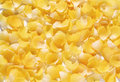Background of delicate yellow flower petals pretty natural scattered randomly on a white surface full frame texture Stock Images
