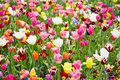 Background with different flowers colorful tulips and Stock Images