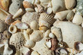 Background from different sea shells close up Royalty Free Stock Photography