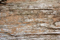 Background of Dirftwood Covered in Grains of Sand Royalty Free Stock Photo