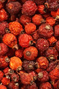 Background from dogrose berries Stock Image