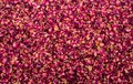 Background of dried rose petals
