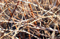 Background of dried twigs