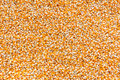 Background from dry corn seed for animal feed Royalty Free Stock Photo