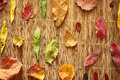Background dry multicolors leaves on a wooden Stock Photos