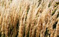 Background of dry plants Stock Photos