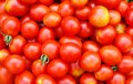 Background with ecological cherry tomatoes Royalty Free Stock Image