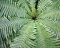 Background fern Royalty Free Stock Photography