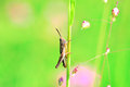 Background flowers and grasshopper Royalty Free Stock Photo