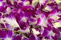 Background of flowers orchids Royalty Free Stock Photo