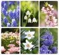 Background flowers spring Arkivbilder