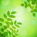 Background with foliage Stock Image