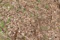 Background of forest floor with wood chips sprigs leafs grass and pine cones brown Royalty Free Stock Photos