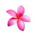 Background of frangipani flower beautiful Royalty Free Stock Photos
