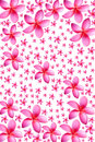 Background of frangipani flower beautiful Stock Image
