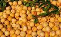 Background of fresh apricots on the market Stock Photography