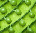 Background of fresh green peas Royalty Free Stock Image