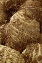 Background of fresh taro root(colocasia)