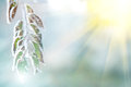 Background of frozen leaves under the frost and sun Royalty Free Stock Photo
