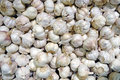 Background from garlic cloves organic food Stock Images