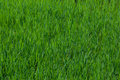 Background grass Stock Photos