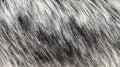 Background Gray Fur